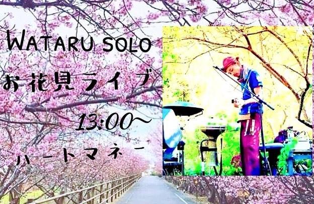 おはようございます。今日もなごみ茶屋オープン️ちえパンもオープンです🥯さくらも落ち着いて、またゆったりな浜岡砂丘。やっぱりこの感じが好きですwコーヒーも@gooddaycoffee2015 さんの美味しいコーヒー各種ございます。ホッとしにお越しくださいね️テイクアウトも可能です.明日3/6は、Wataru & Nao Sugimotoライブは延期になりWataruくんのソロライブになりましたjiroくんが、Liveペイントで参加してくれる事になりました@jiro_artworks 河津さくらは、もう終わりですが、菜の花はまだ咲いてくれていますなごみ茶屋も、ちえパンもオープンしています♪ぜひぜひゆるりとしにどうぞ︎.Wataru お花見ソロライブ in なごみ.日時 3/6(土) 会場 浜岡砂丘なごみ静岡県御前崎市池新田9122-1時間 13:00~料金 ハートマネー(投げ銭制)問い合わせ utakazoku@gmail.com.*fbイベントページ : https://www.facebook.com/events/121154369891386/?ti=icl.*Wataru プロフィールutakazoku musicのサウンドエンジニア。パートナーYoshieとのユニットUTAKAで静岡を中心に演奏活動中。火を焚き、土を触る暮らしの中から起こるヒラメキを音の世界へ投影しながら自由に音を模索している。.2020年ソロ演奏活動を開始。小柄な民族楽器を中心にトライバルなミニマルミュージックを展開。.カリンバ、ゆう琴、パーカッション、ミンミン、歌 、and more#浜岡砂丘 #浜岡砂丘なごみ #ライブ#ちえぱん #ゆるきゃん #キャンプ #クラフトバーガー #御前崎市 #長岡式酵素玄米 #すっかりはるですね