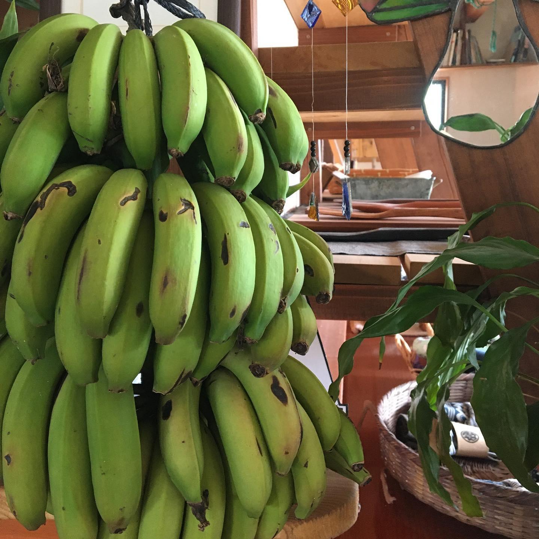 ゴールデンウィークスタート今日から宮崎産無農薬バナナでバナナスムージーやりまーす♪山下メロン園のマスクメロンのスムージーとメロンのチェーもね︎つゆひかりカフェは13:30〜15:00となりますあげたてのつゆひかりドーナツと新茶つゆひかりが楽しめます。今日は、@sakyu.sunae さんの砂絵ワークショップ。@hanamatsumu さんの真鍮バングルワークショップもやってますどちらも飛び入りOK♀️のんびりしにお越しくださいませ#浜岡砂丘なごみ #浜岡砂丘 #浜岡砂丘キャンプ場 #国産バナナ #メロンスイーツ #ハンバーガー #ゆるキャン